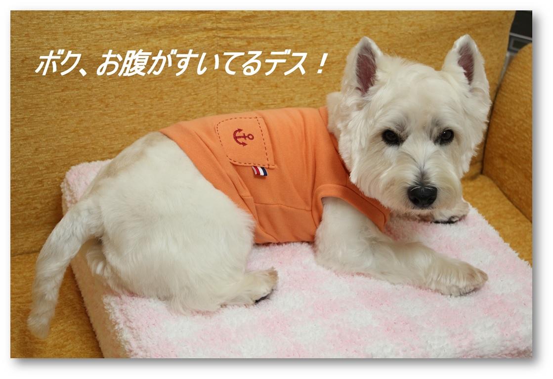 ☆3780円の福袋☆_a0161111_2110477.jpg
