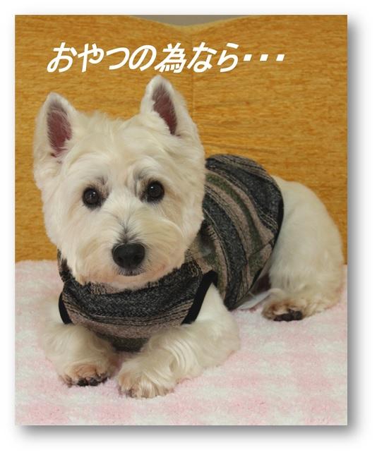 ☆3780円の福袋☆_a0161111_21154045.jpg