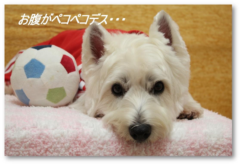 ☆3780円の福袋☆_a0161111_21413019.jpg