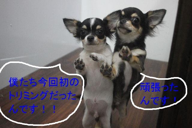 ハロウィンのお知らせぇ~!!_b0130018_2239167.jpg