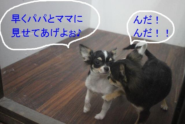 ハロウィンのお知らせぇ~!!_b0130018_22392841.jpg