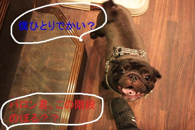 ハロウィンのお知らせぇ~!!_b0130018_22405050.jpg