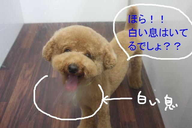 b0130018_22433885.jpg