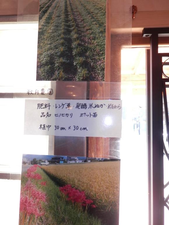 「自然農の玄米」販売いたします。_a0125419_18334084.jpg