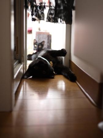 おはよっ猫 ぎゃぉすてぃぁら編。_a0143140_22302160.jpg