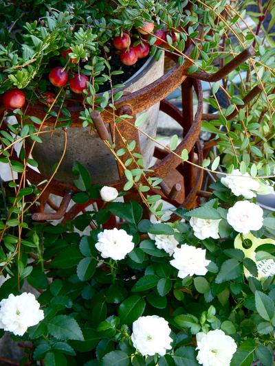 秋のガーデニング。。。_a0229658_14222158.jpg