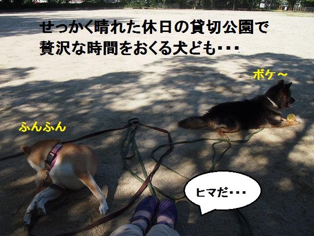 f0253473_2015474.jpg