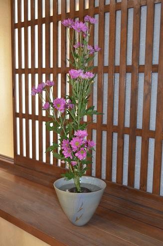 ピンクの菊 一種生け_d0230676_13344141.jpg