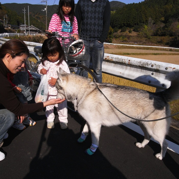 Memory of the second pilgrimage with husky HANA_c0049299_11595995.jpg