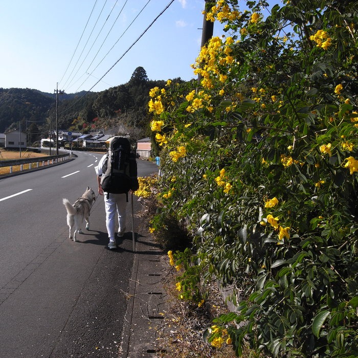 Memory of the second pilgrimage with husky HANA_c0049299_1273850.jpg