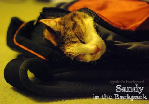 猫の寝袋_b0253205_1214798.jpg