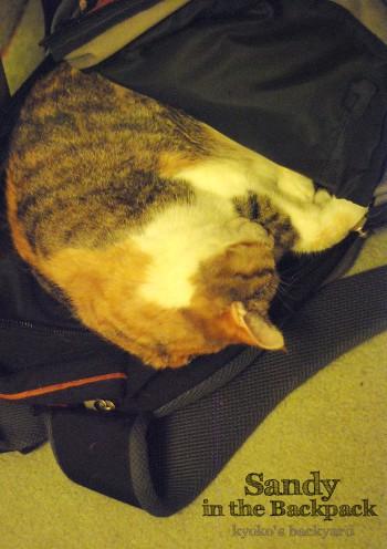 猫の寝袋_b0253205_12158.jpg