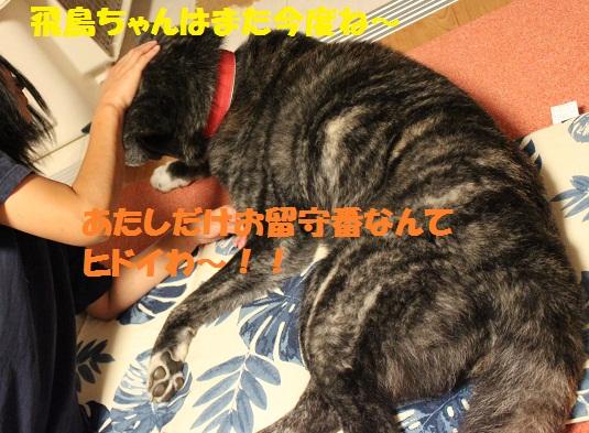 f0121712_1665352.jpg