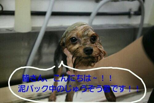お散歩_b0130018_1718519.jpg