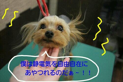お散歩_b0130018_17202520.jpg