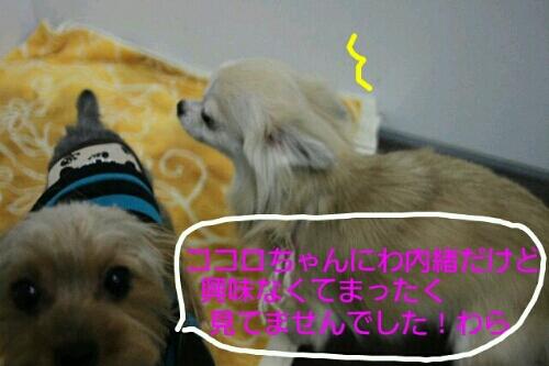 お散歩_b0130018_17212614.jpg