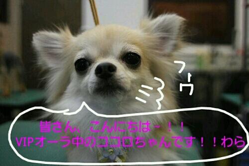 お散歩_b0130018_17212949.jpg
