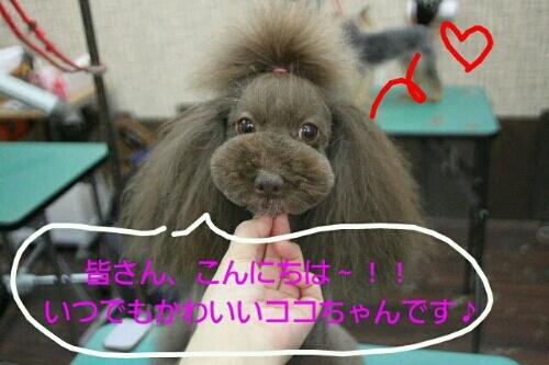 お散歩_b0130018_18524197.jpg