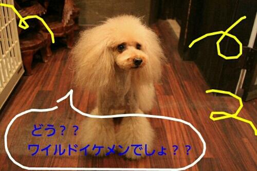 お散歩_b0130018_18525913.jpg
