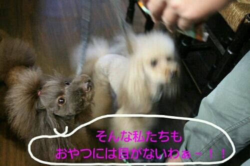 お散歩_b0130018_18532345.jpg