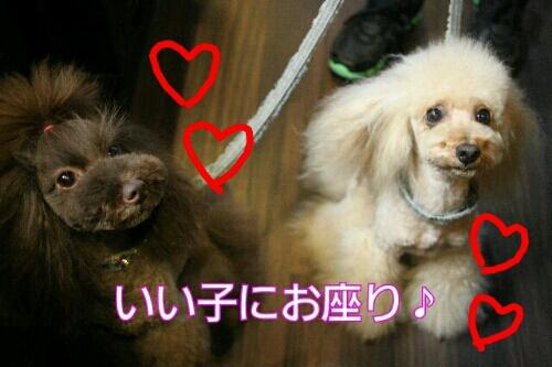 お散歩_b0130018_18534525.jpg