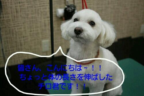 お散歩_b0130018_18552961.jpg