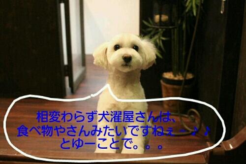 お散歩_b0130018_18571311.jpg
