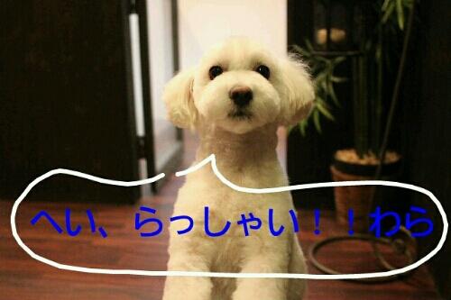 お散歩_b0130018_1858032.jpg