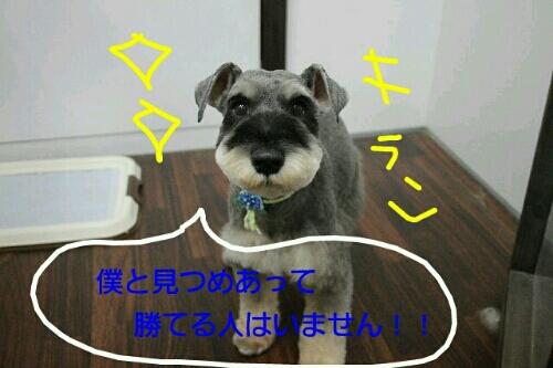 お散歩_b0130018_18595738.jpg