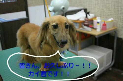 お散歩_b0130018_1913492.jpg