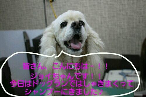 お散歩_b0130018_1934779.jpg