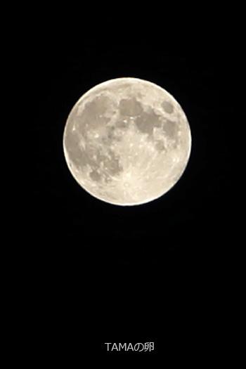 中秋の名月ですね_c0024729_2036591.jpg