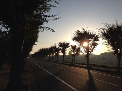 JOG 1 本日より朝ジョギング開始です。_a0139242_6201624.jpg