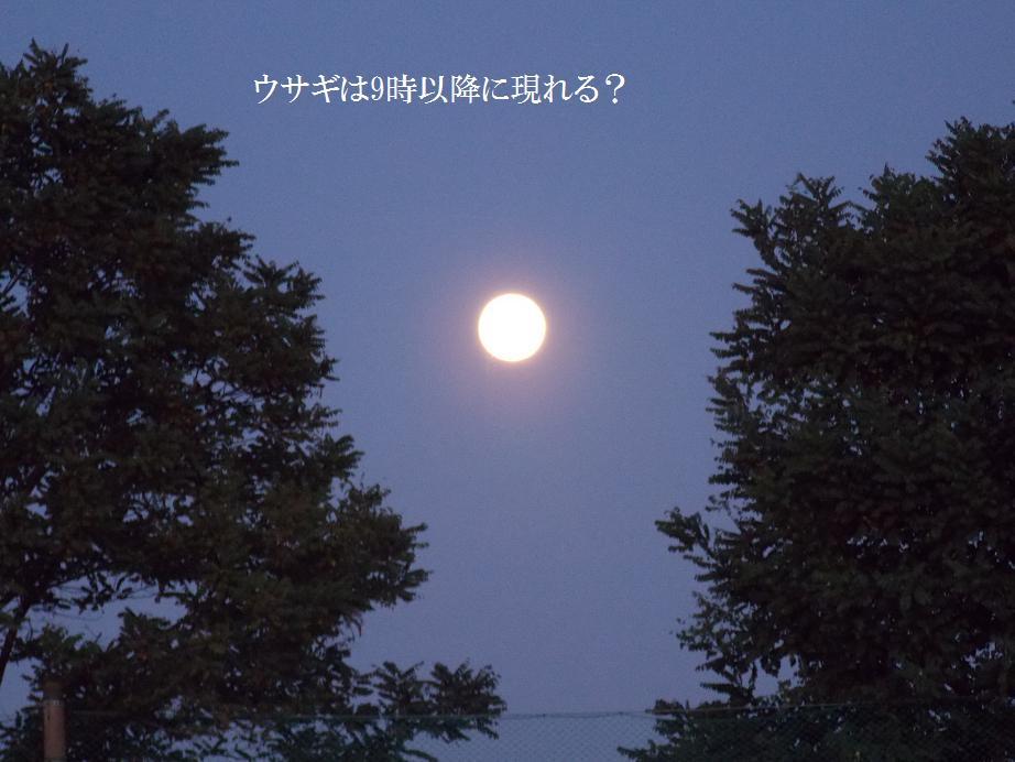 b0193252_18332380.jpg