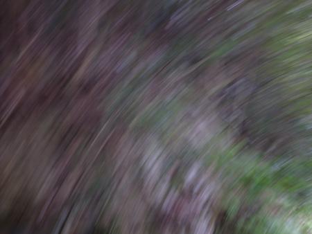 2013年9月『奥信州 幻のキノコ旅』【3】_e0071652_6425784.jpg