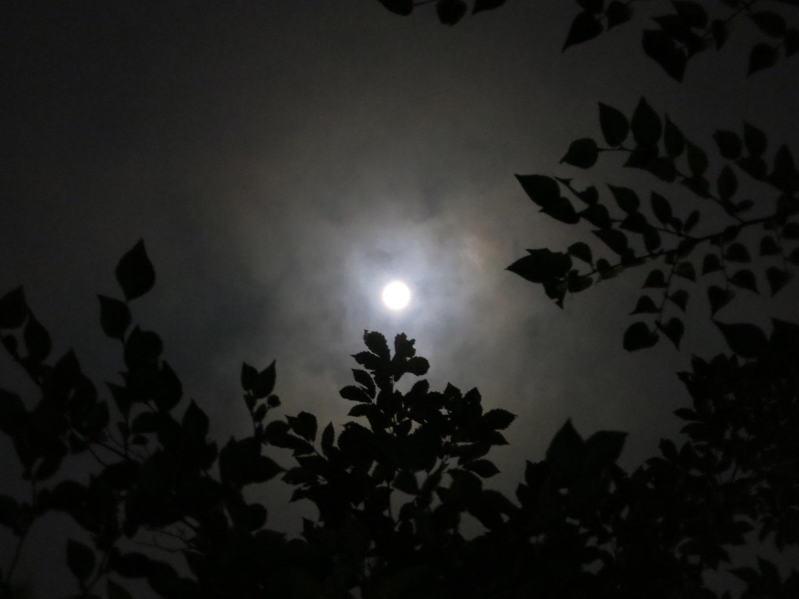 中秋の名月_f0236260_23203817.jpg