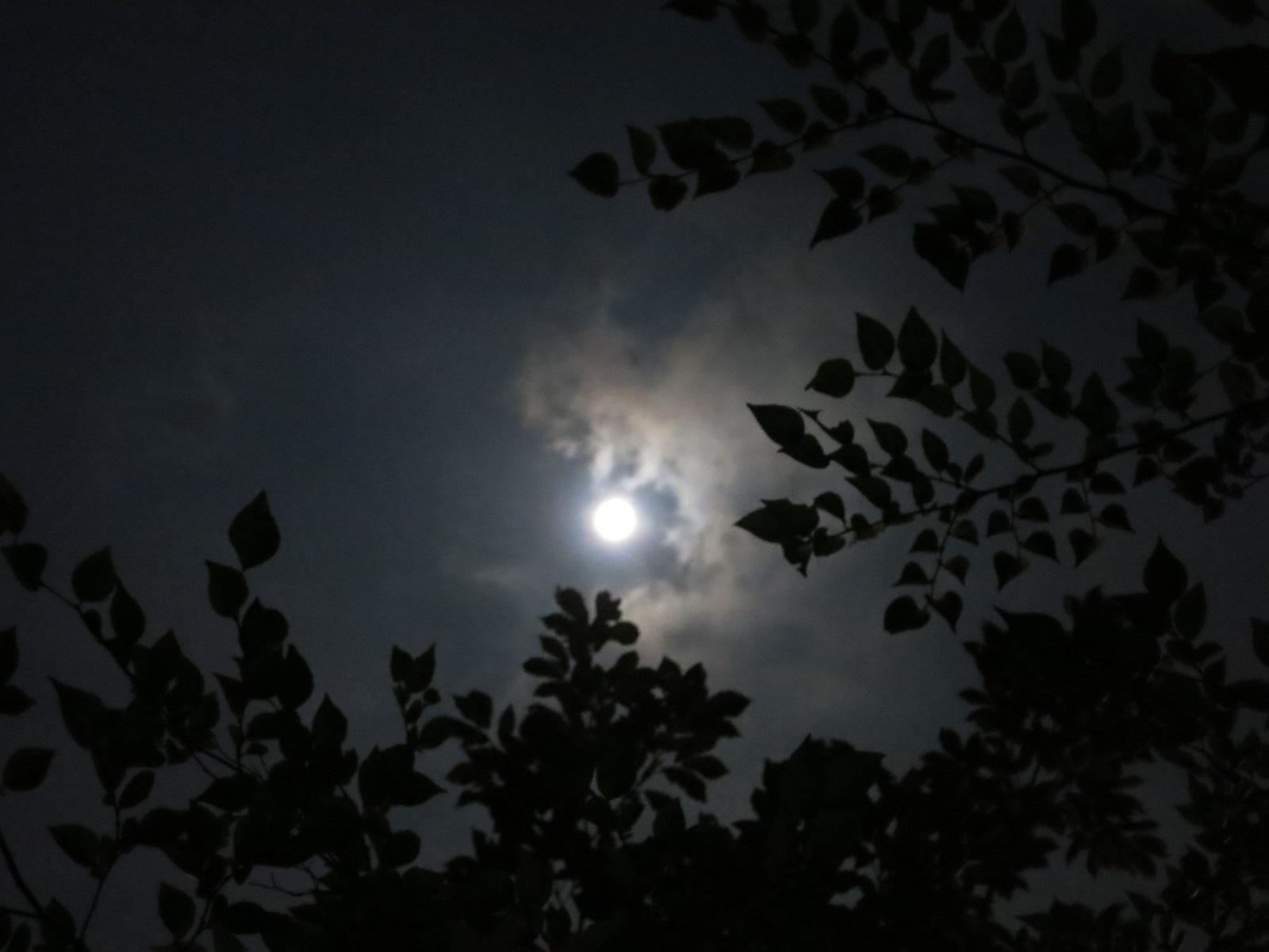 中秋の名月_f0236260_23204923.jpg