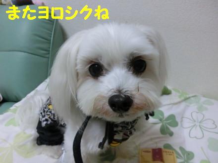 b0193480_21375227.jpg
