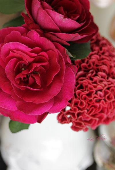 rose プリンスとふりふりケイトウ_f0127281_23444368.jpg