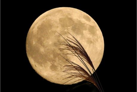 今日は、中秋の名月!しかも、満月~!_d0060693_19175138.jpg