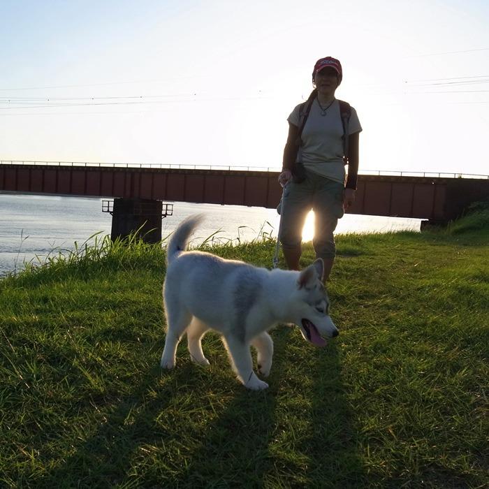 子犬 充実のラインナップ_c0049299_19453448.jpg