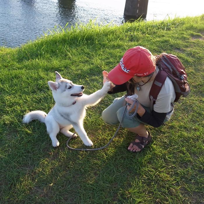 子犬 充実のラインナップ_c0049299_19462194.jpg