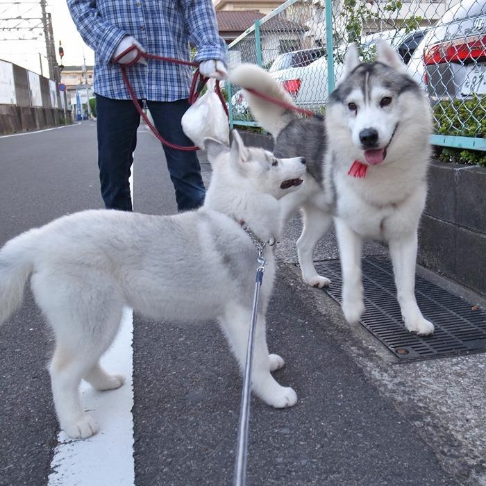 子犬 充実のラインナップ_c0049299_1951154.jpg