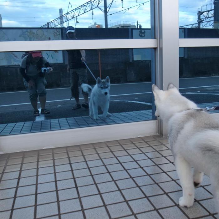 子犬 充実のラインナップ_c0049299_19521520.jpg