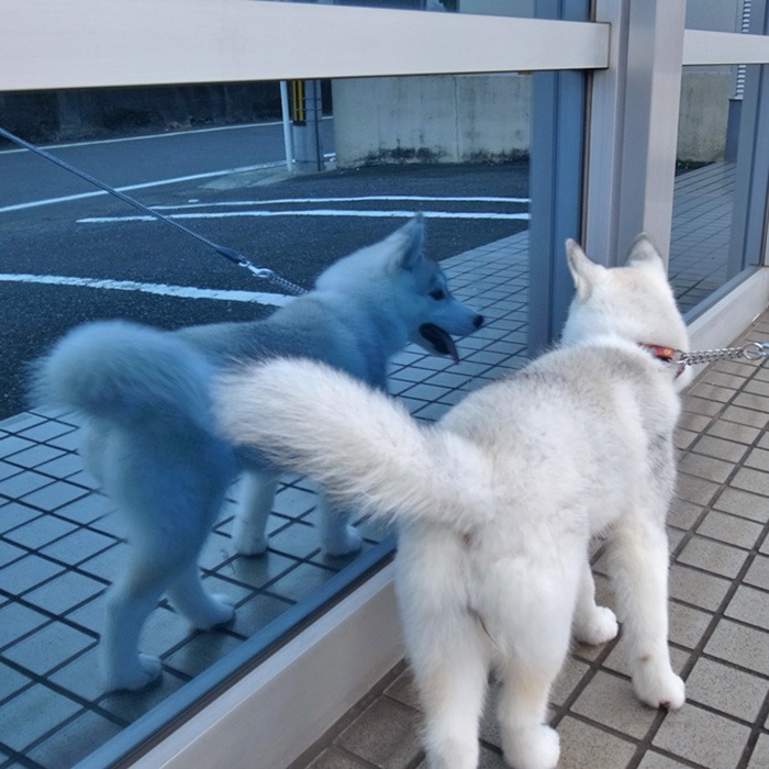 子犬 充実のラインナップ_c0049299_19525734.jpg