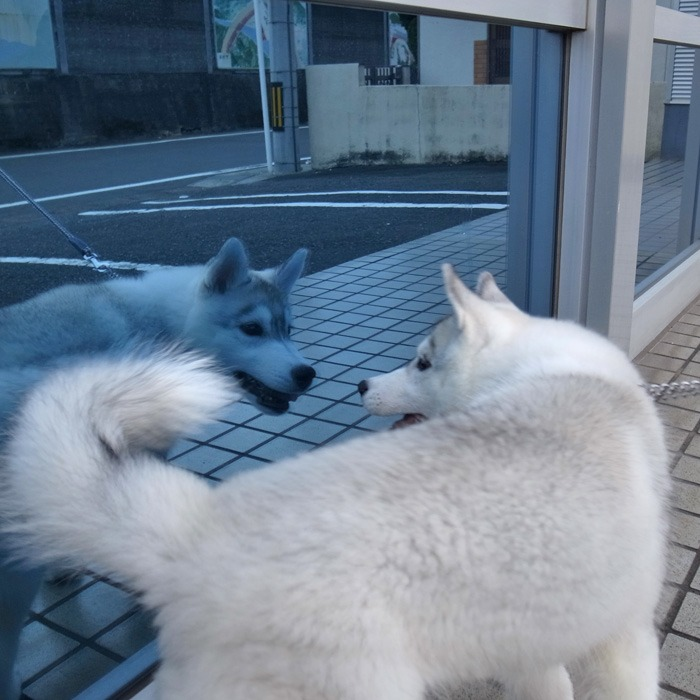 子犬 充実のラインナップ_c0049299_19532692.jpg