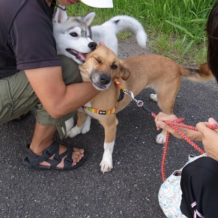子犬 充実のラインナップ_c0049299_19551072.jpg