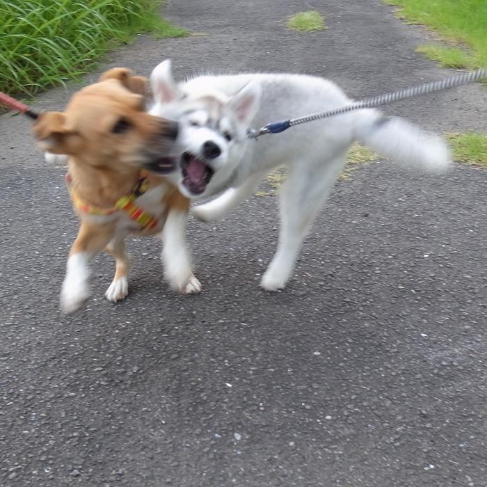 子犬 充実のラインナップ_c0049299_19574070.jpg