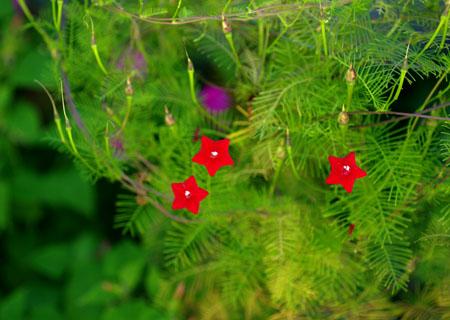 今の庭の花_c0081499_2147268.jpg