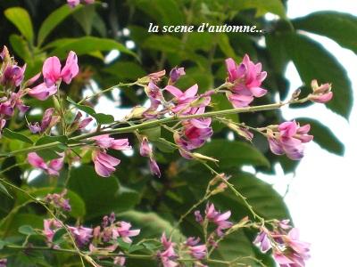 秋の萩の花と、池の庭での観月・・・☆_c0098807_21285882.jpg
